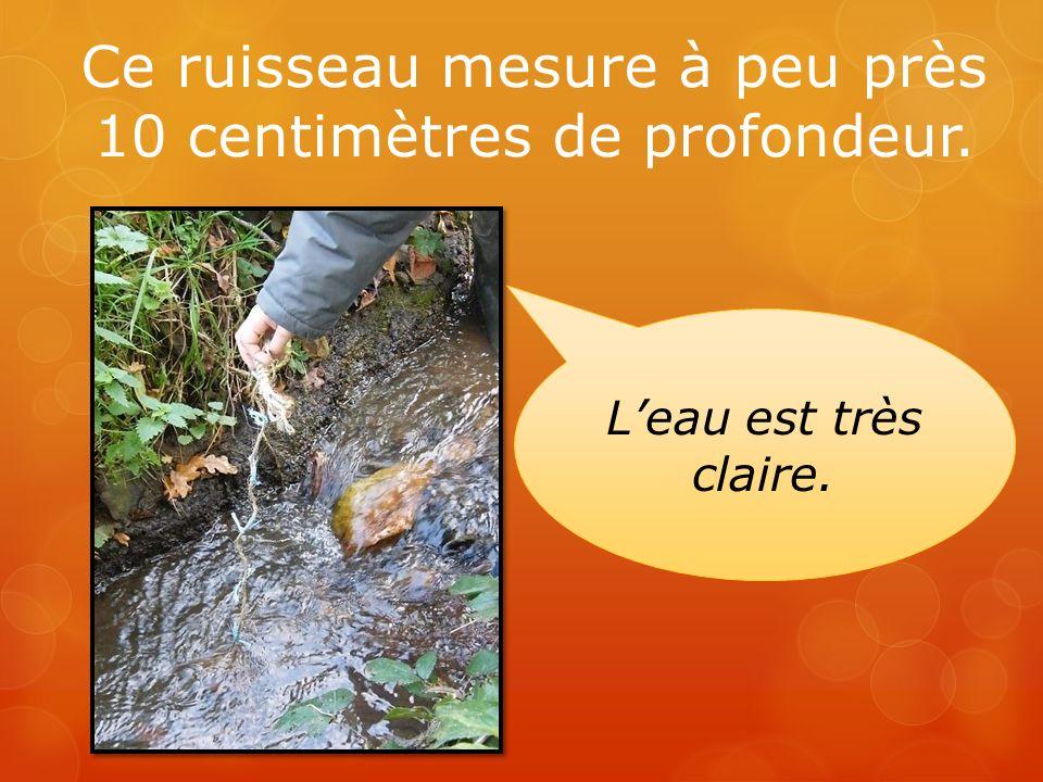 Ce ruisseau mesure à peu près 10 centimètres de profondeur.