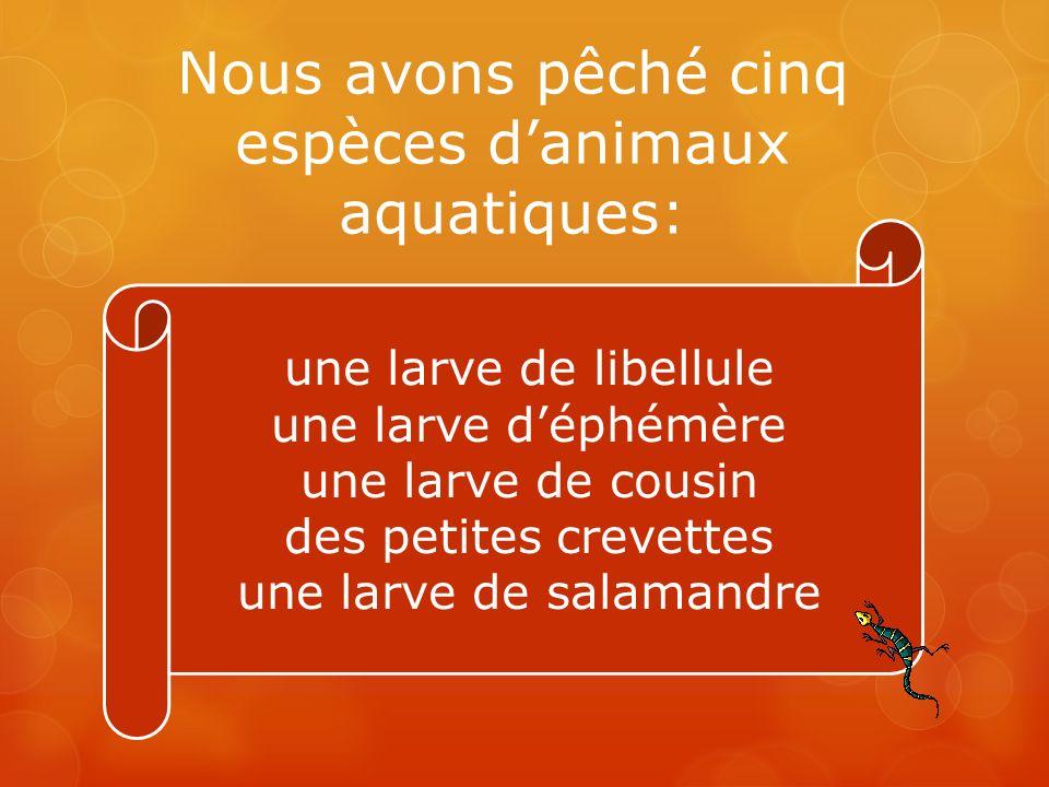 Nous avons pêché cinq espèces d'animaux aquatiques: