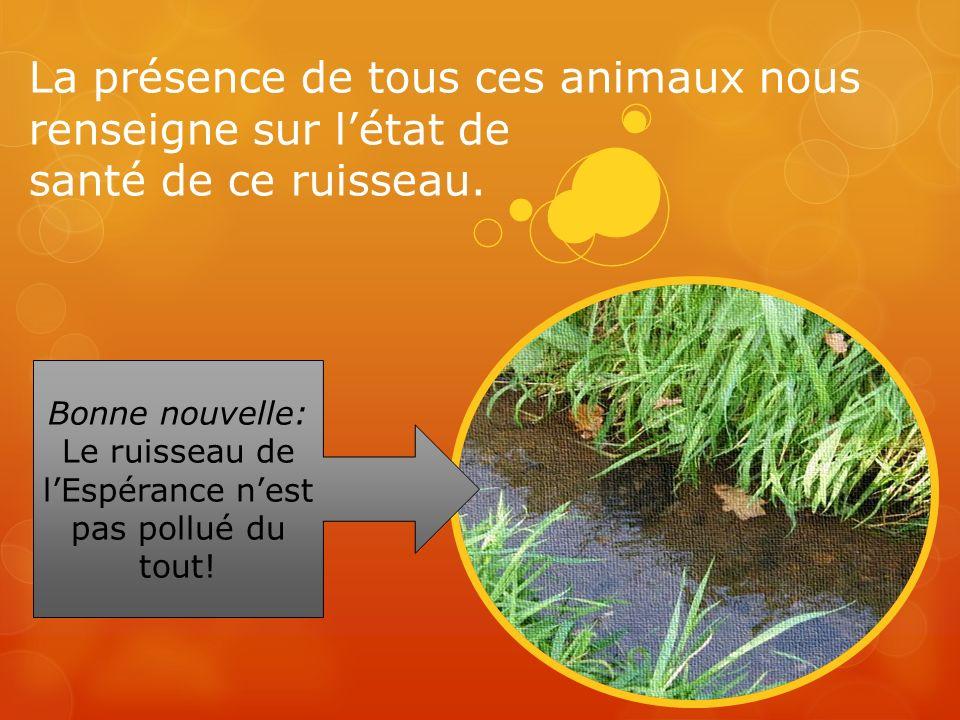 Bonne nouvelle: Le ruisseau de l'Espérance n'est pas pollué du tout!