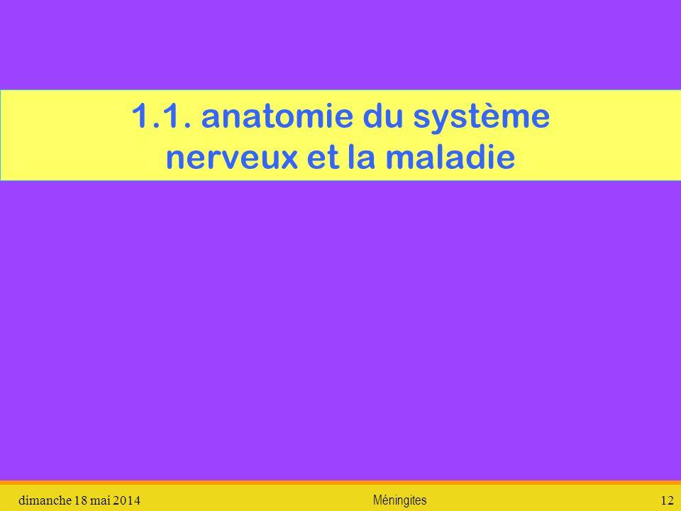 1.1. anatomie du système nerveux et la maladie