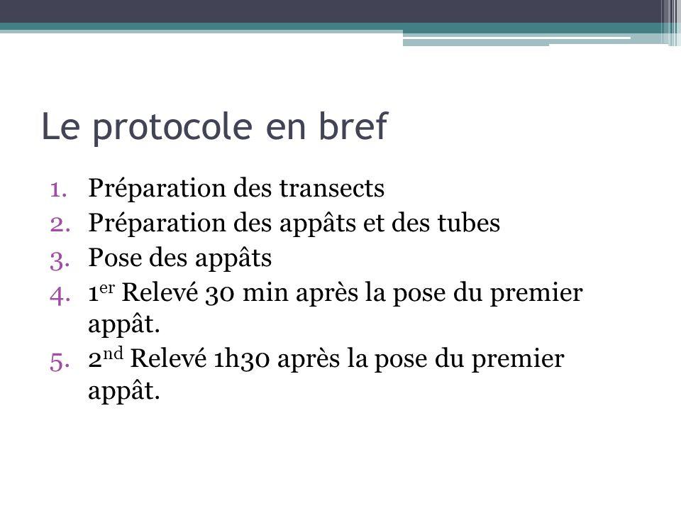 Le protocole en bref Préparation des transects