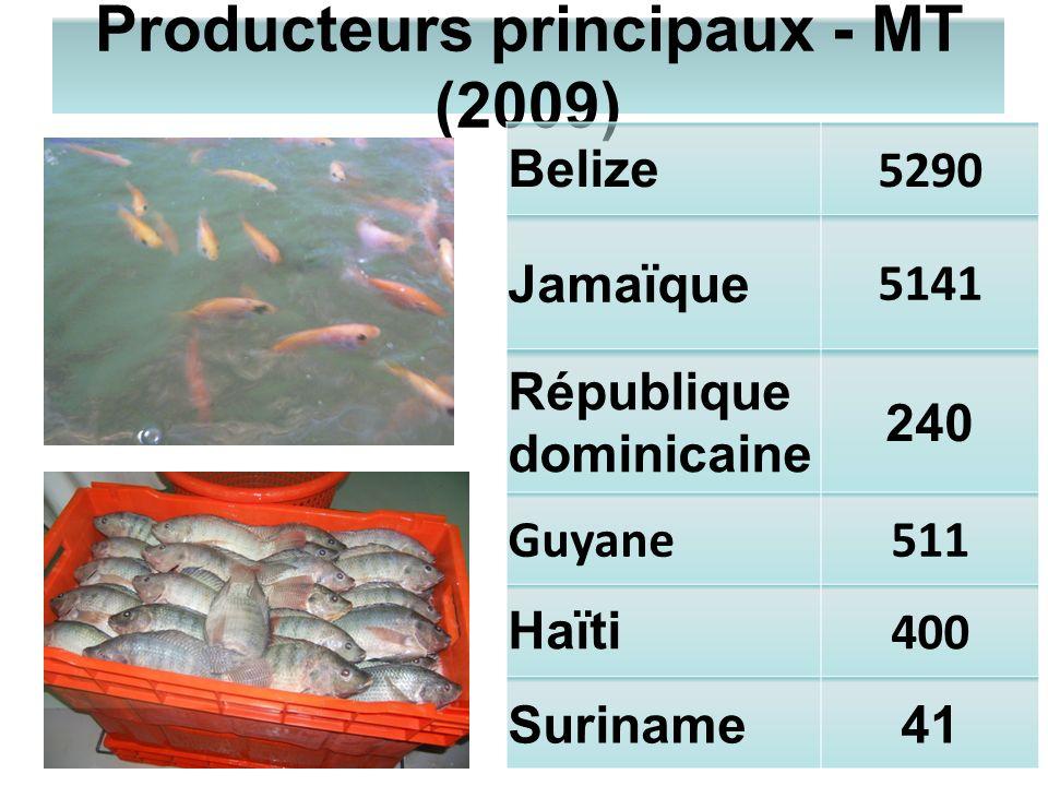 Producteurs principaux - MT (2009)