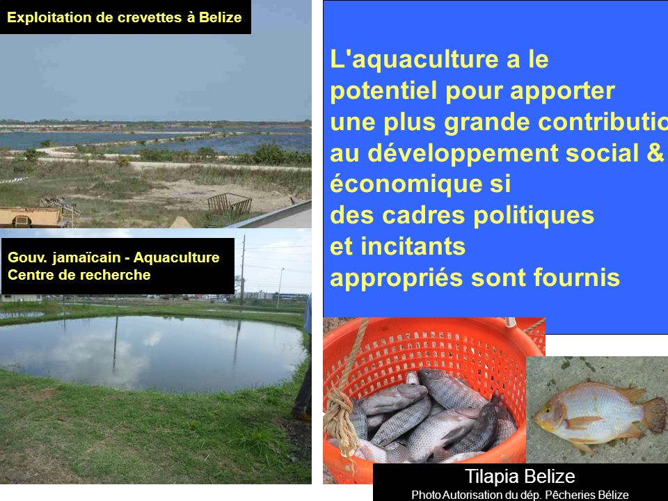 Photo Autorisation du dép. Pêcheries Bélize