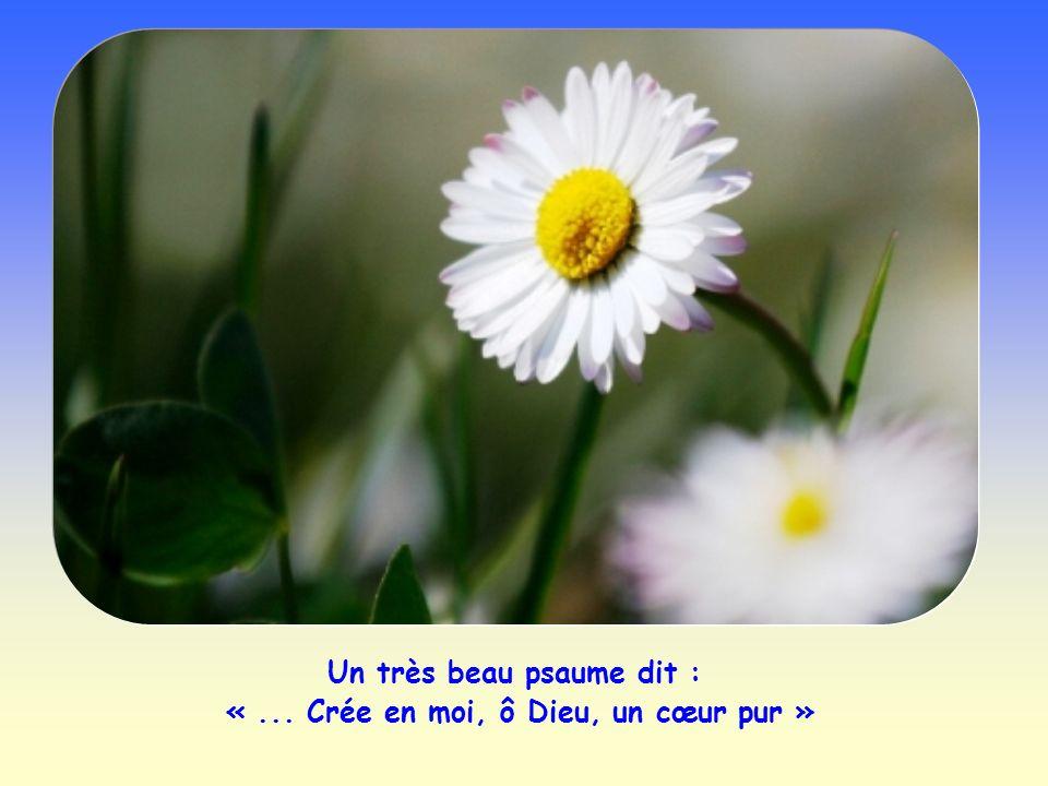 Un très beau psaume dit : « ... Crée en moi, ô Dieu, un cœur pur »