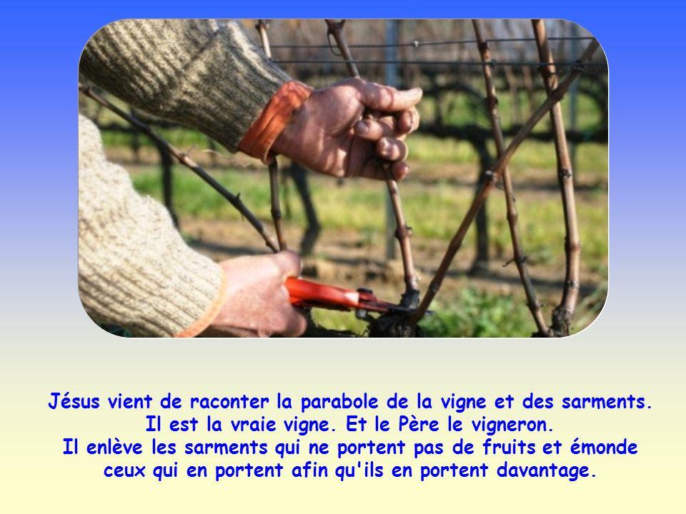 Jésus vient de raconter la parabole de la vigne et des sarments