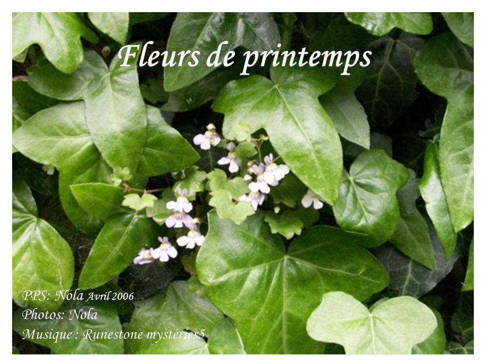 Fleurs de printemps PPS: Nola Avril 2006 Photos: Nola