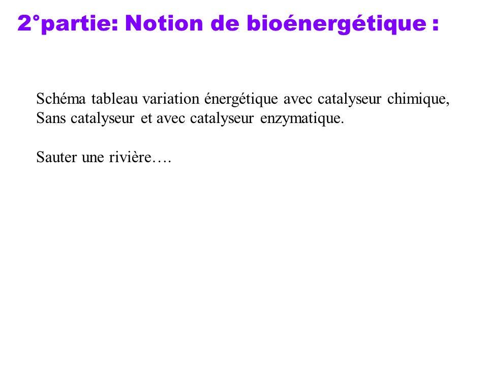 2°partie: Notion de bioénergétique :