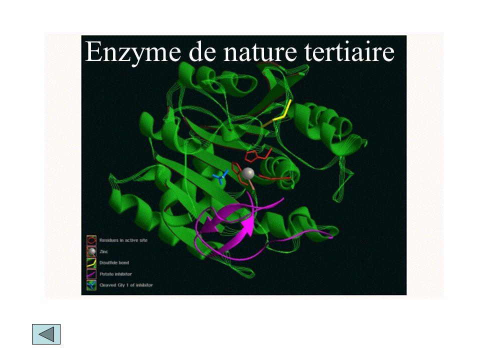 Enzyme de nature tertiaire