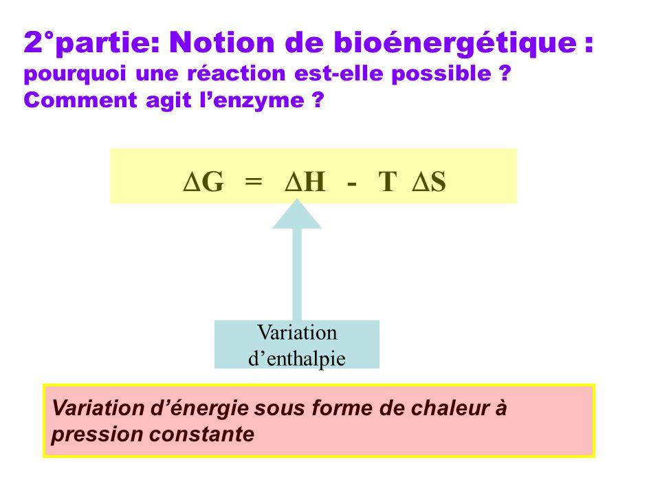 2°partie: Notion de bioénergétique : pourquoi une réaction est-elle possible Comment agit l'enzyme