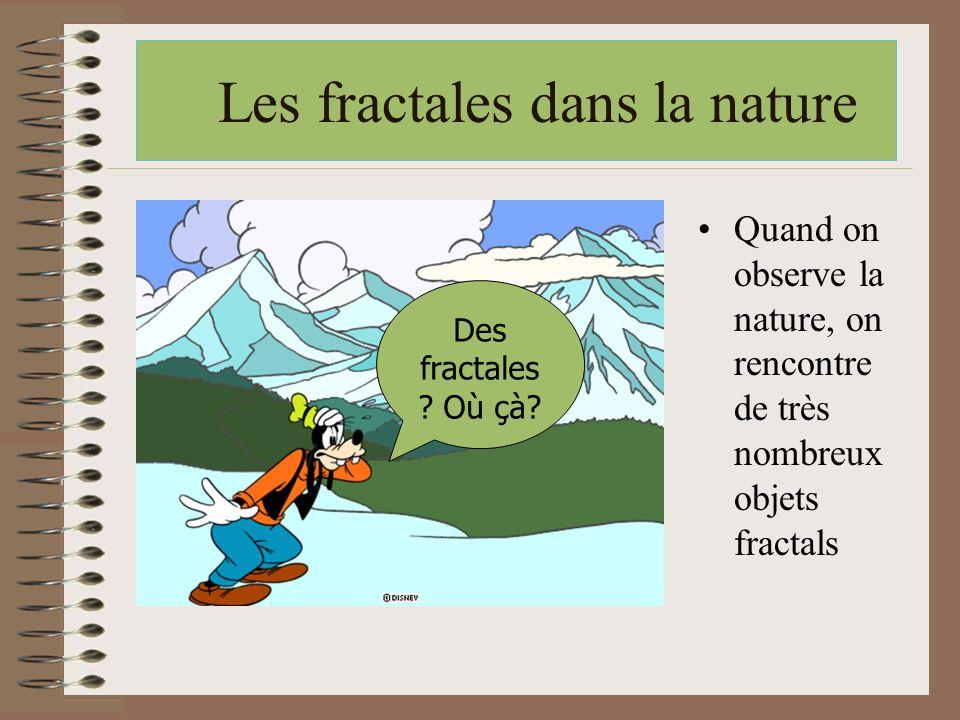 Les fractales dans la nature