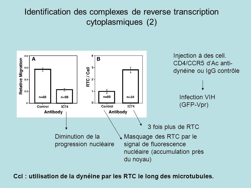 Identification des complexes de reverse transcription cytoplasmiques (2)
