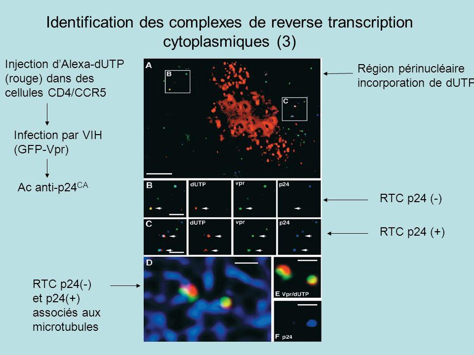 Identification des complexes de reverse transcription cytoplasmiques (3)