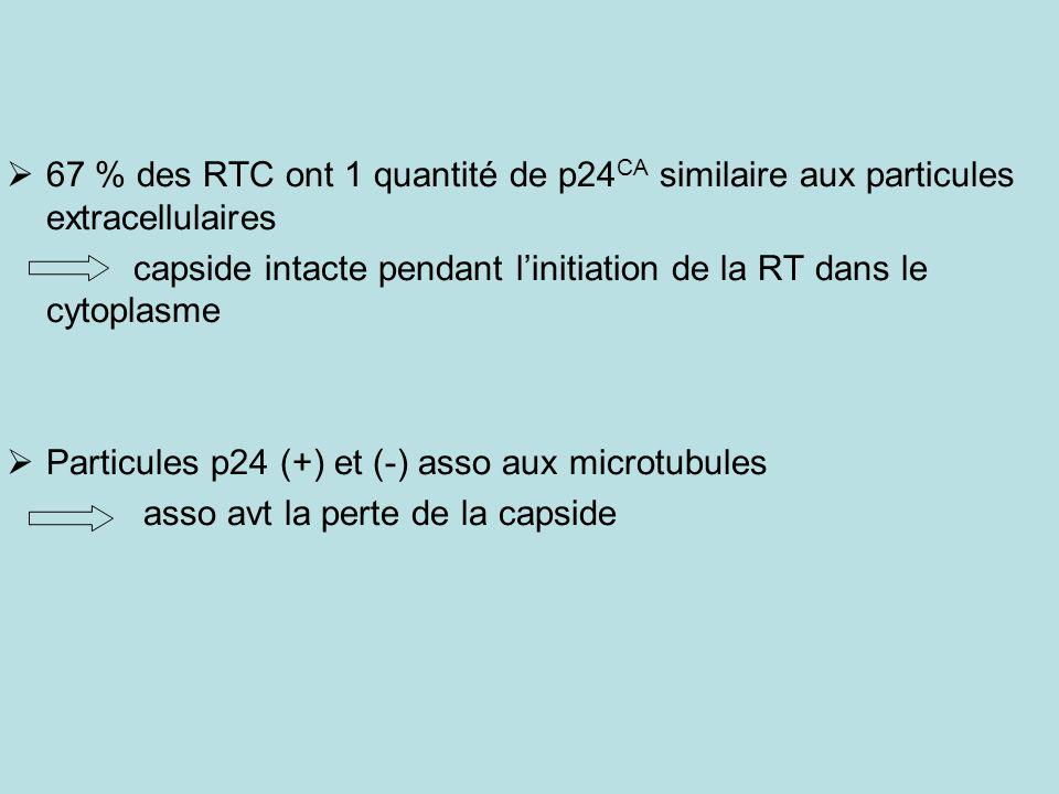 67 % des RTC ont 1 quantité de p24CA similaire aux particules extracellulaires