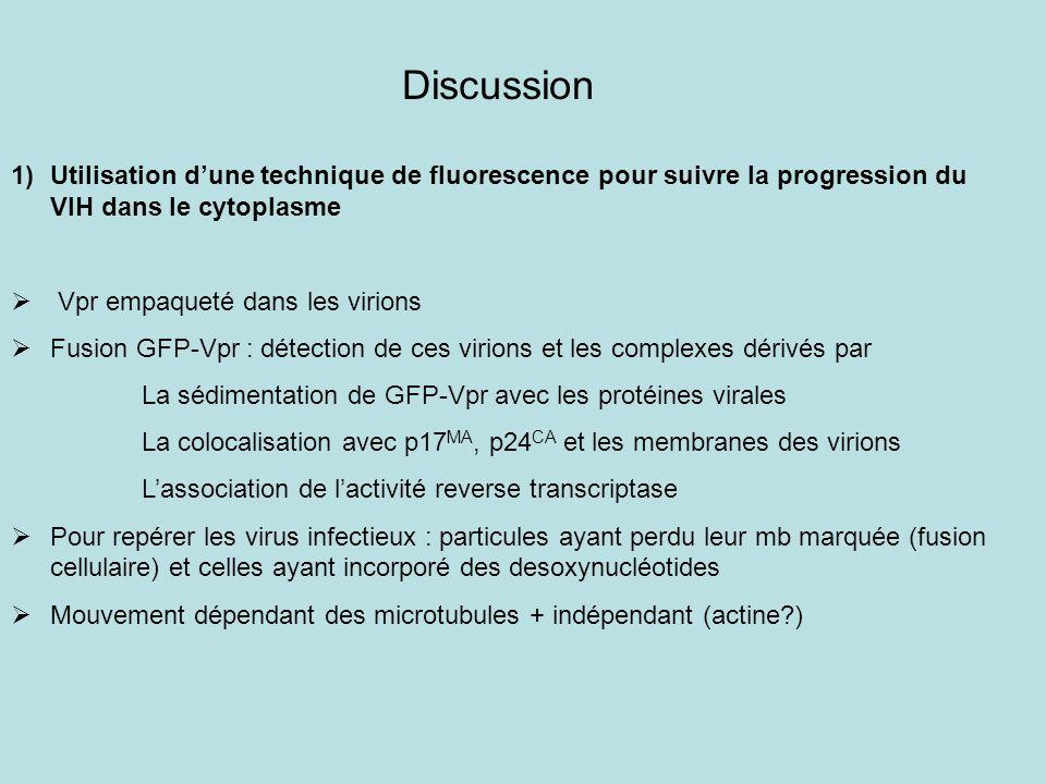 Discussion Utilisation d'une technique de fluorescence pour suivre la progression du VIH dans le cytoplasme.