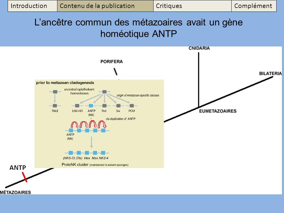 L'ancêtre commun des métazoaires avait un gène homéotique ANTP