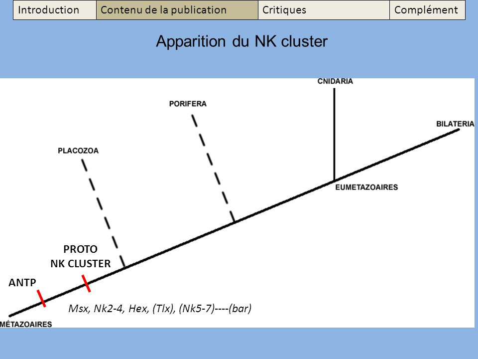 Apparition du NK cluster