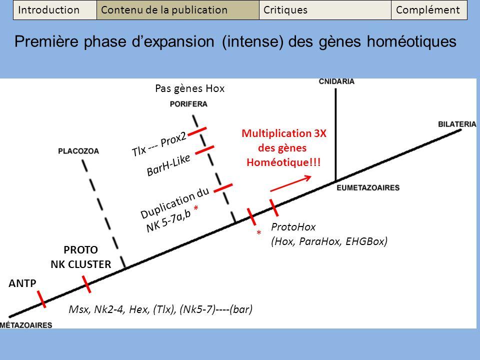 Première phase d'expansion (intense) des gènes homéotiques
