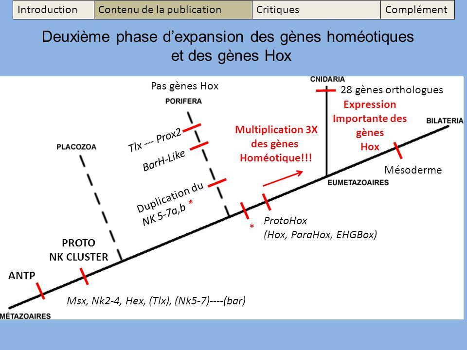 Deuxième phase d'expansion des gènes homéotiques