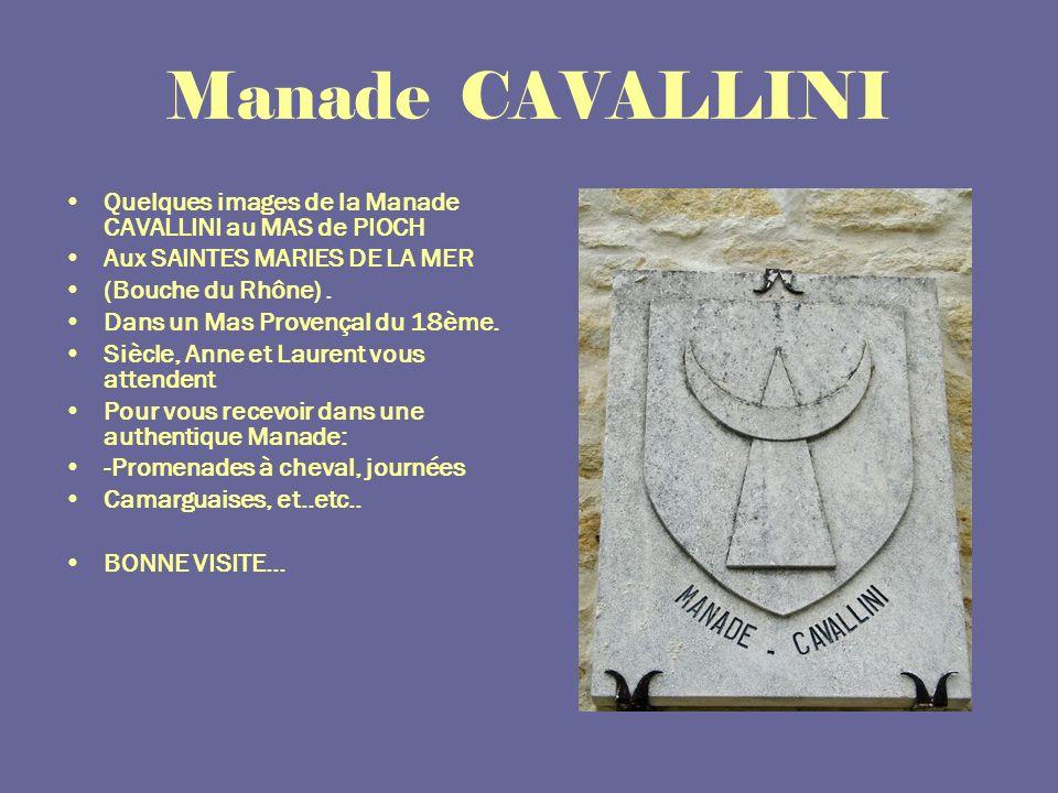 Manade CAVALLINI Quelques images de la Manade CAVALLINI au MAS de PIOCH. Aux SAINTES MARIES DE LA MER.