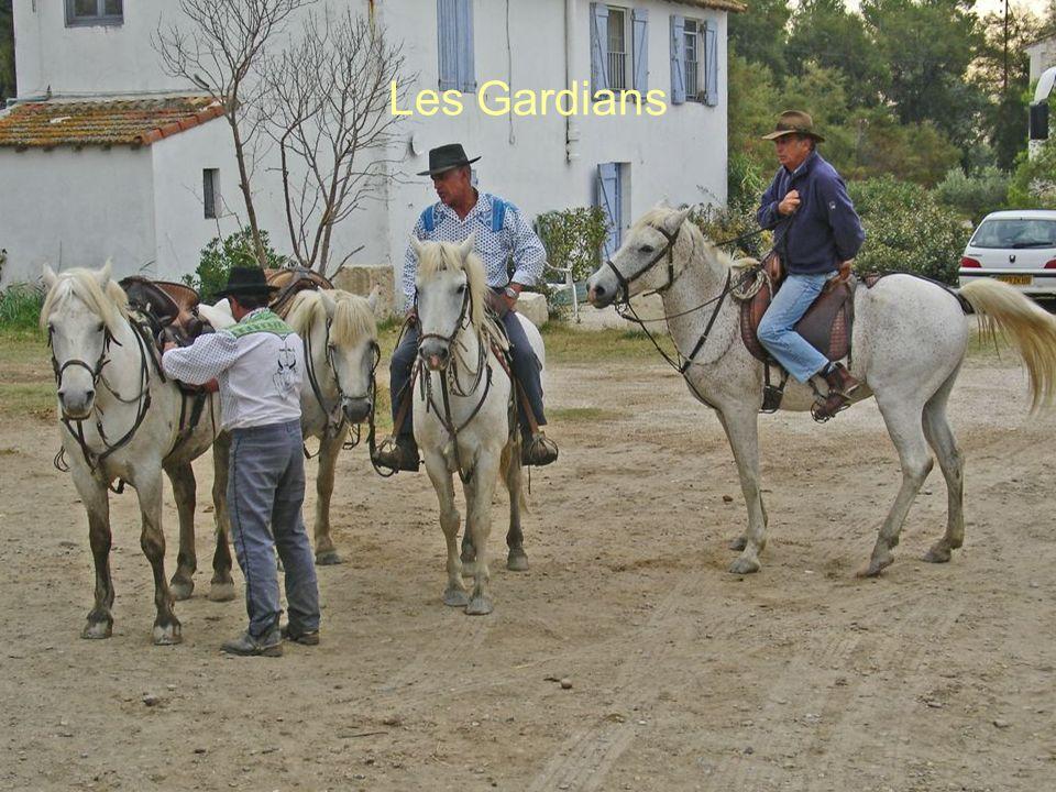 Les Gardians