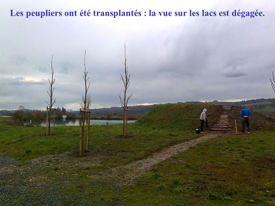 Les peupliers ont été transplantés : la vue sur les lacs est dégagée.
