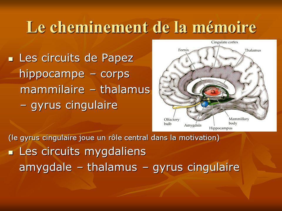 Le cheminement de la mémoire