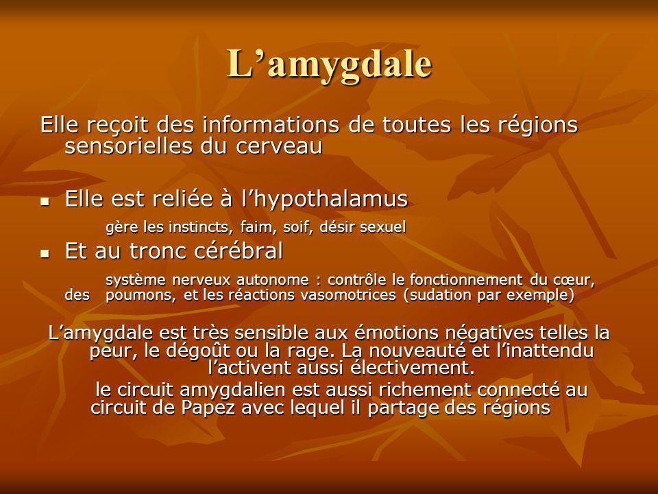 L'amygdale Elle reçoit des informations de toutes les régions sensorielles du cerveau. Elle est reliée à l'hypothalamus.