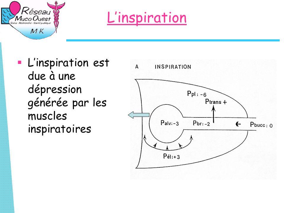 L'inspiration L'inspiration est due à une dépression générée par les muscles inspiratoires