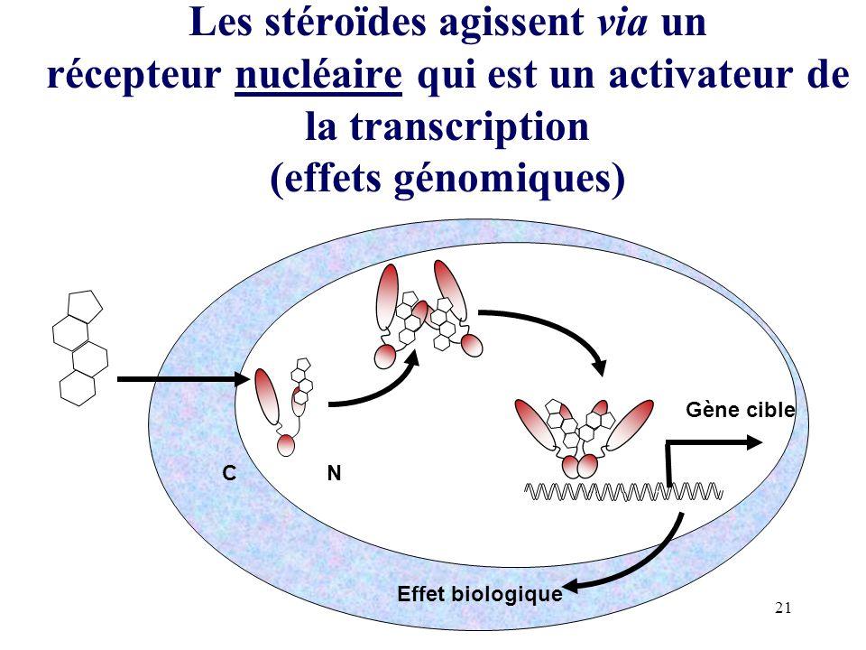 Les stéroïdes agissent via un récepteur nucléaire qui est un activateur de la transcription (effets génomiques)