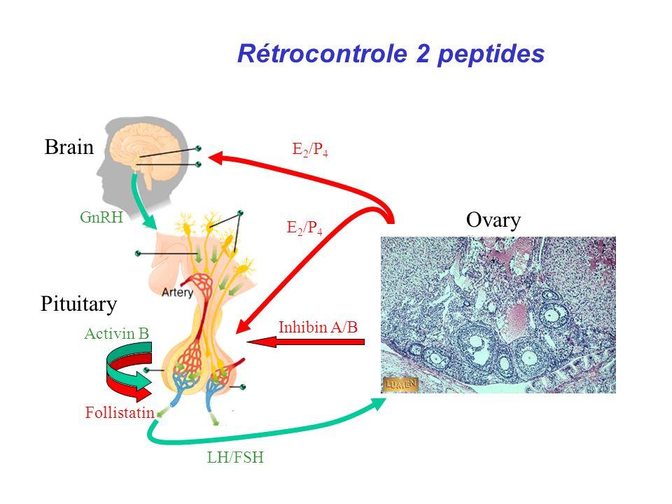 Rétrocontrole 2 peptides