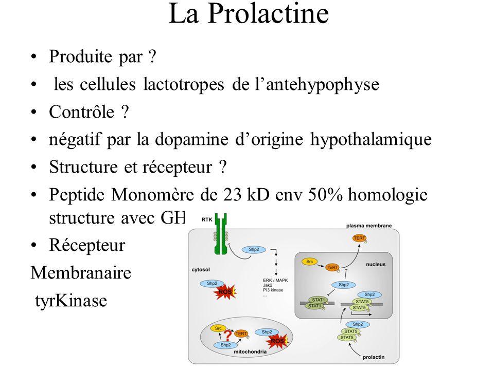 La Prolactine Produite par