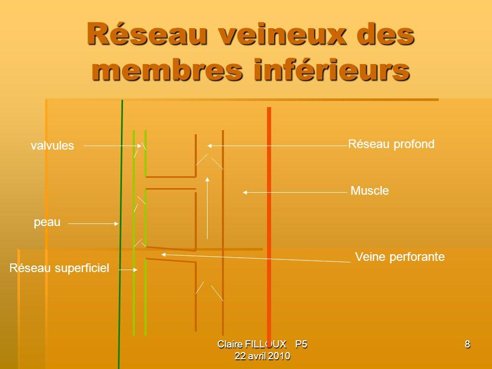 Réseau veineux des membres inférieurs