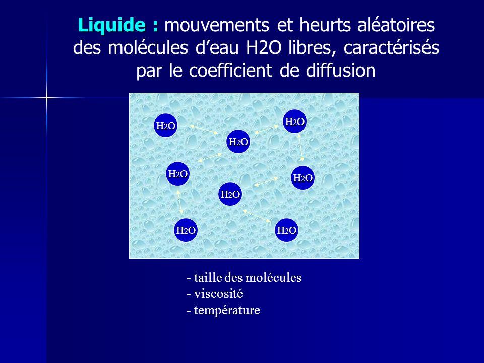 Liquide : mouvements et heurts aléatoires des molécules d'eau H2O libres, caractérisés par le coefficient de diffusion