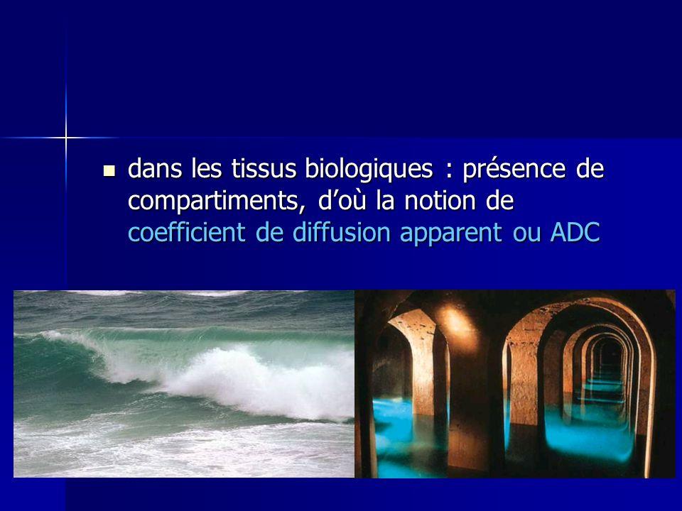 dans les tissus biologiques : présence de compartiments, d'où la notion de coefficient de diffusion apparent ou ADC