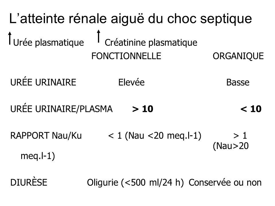 L'atteinte rénale aiguë du choc septique