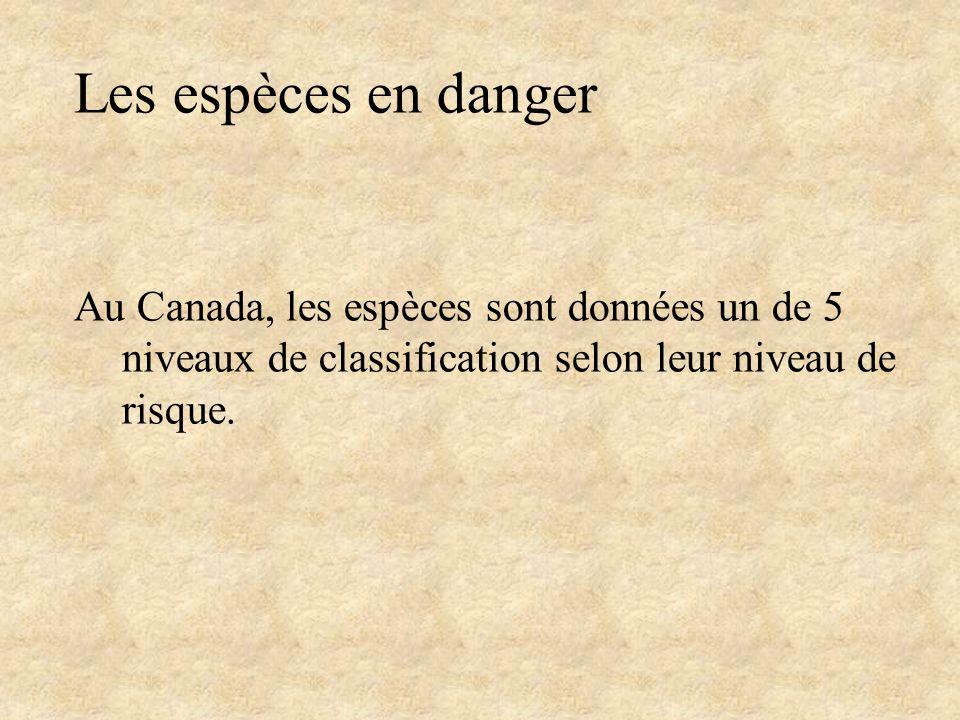 Les espèces en danger Au Canada, les espèces sont données un de 5 niveaux de classification selon leur niveau de risque.