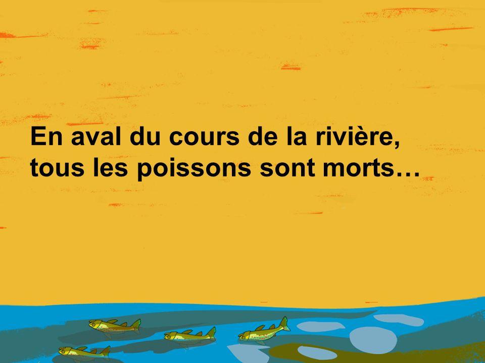 En aval du cours de la rivière, tous les poissons sont morts…
