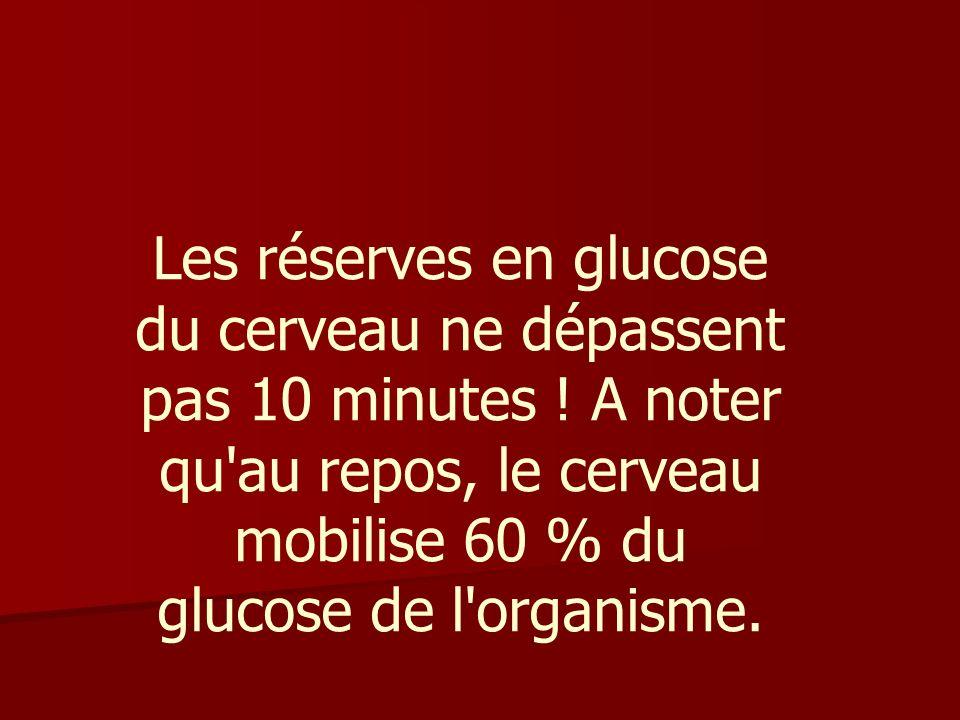 Les réserves en glucose du cerveau ne dépassent pas 10 minutes
