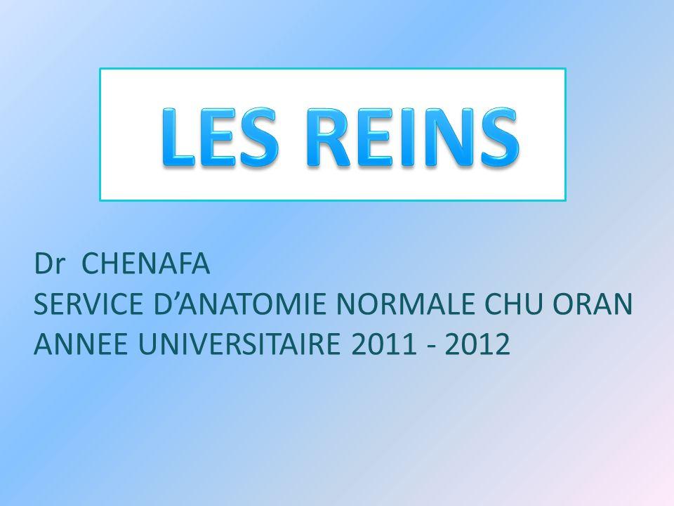 LES REINS Dr CHENAFA SERVICE D'ANATOMIE NORMALE CHU ORAN