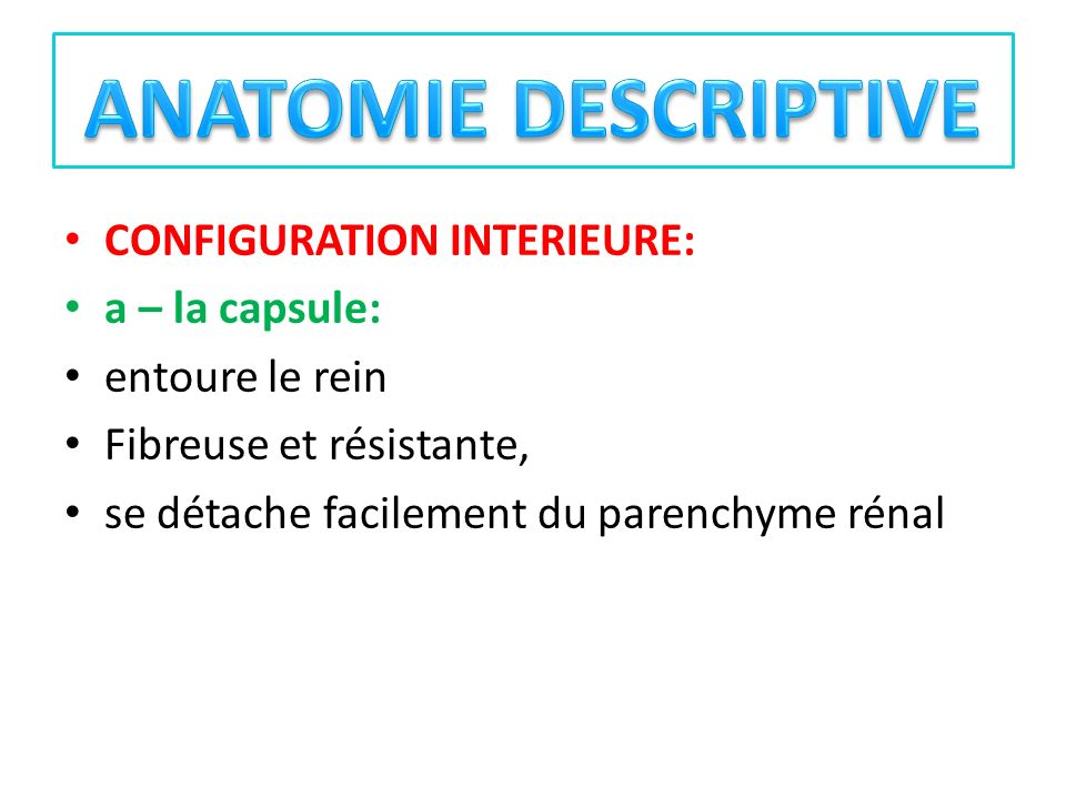 ANATOMIE DESCRIPTIVE CONFIGURATION INTERIEURE: a – la capsule: