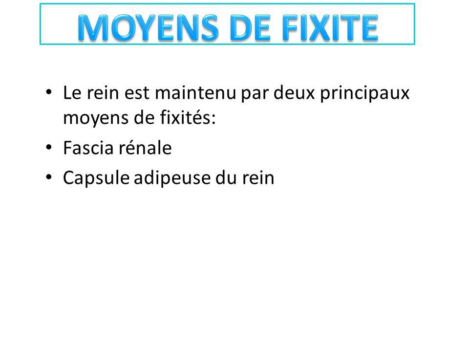 MOYENS DE FIXITE Le rein est maintenu par deux principaux moyens de fixités: Fascia rénale.