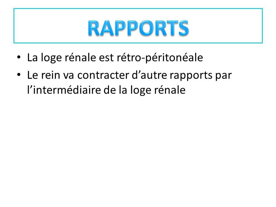 RAPPORTS La loge rénale est rétro-péritonéale