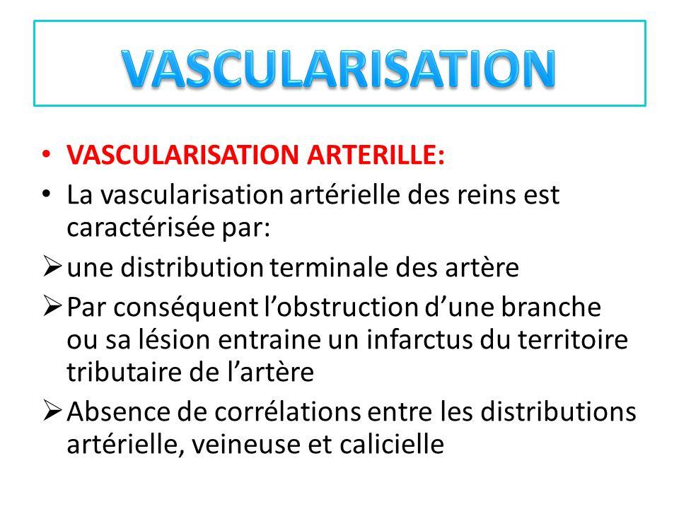 VASCULARISATION VASCULARISATION ARTERILLE: