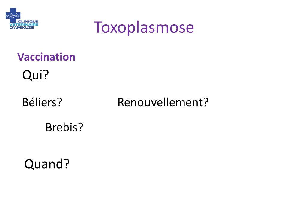 Toxoplasmose Vaccination Qui Béliers Renouvellement Brebis Quand