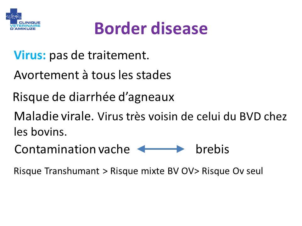 Border disease Virus: pas de traitement. Avortement à tous les stades