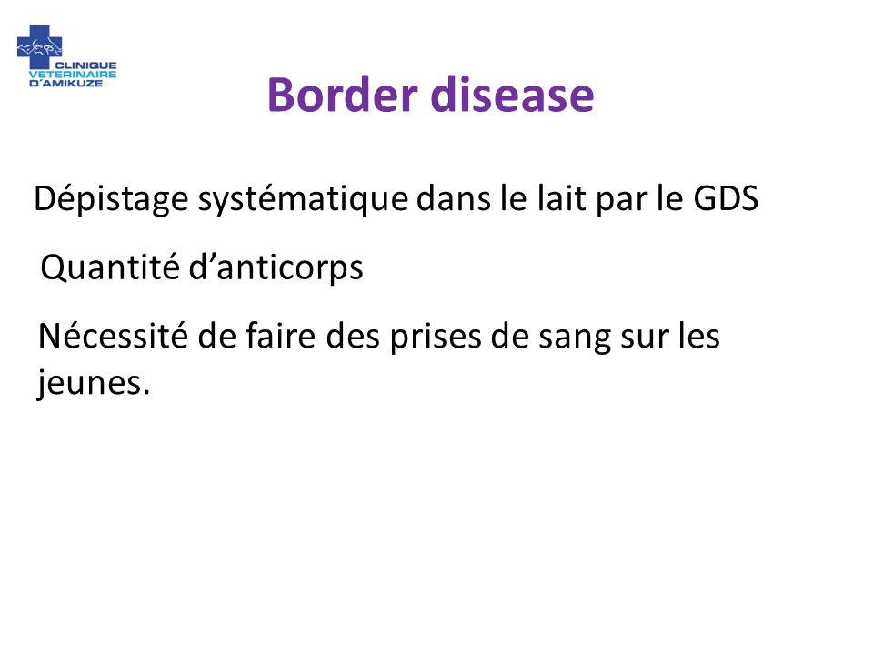 Border disease Dépistage systématique dans le lait par le GDS