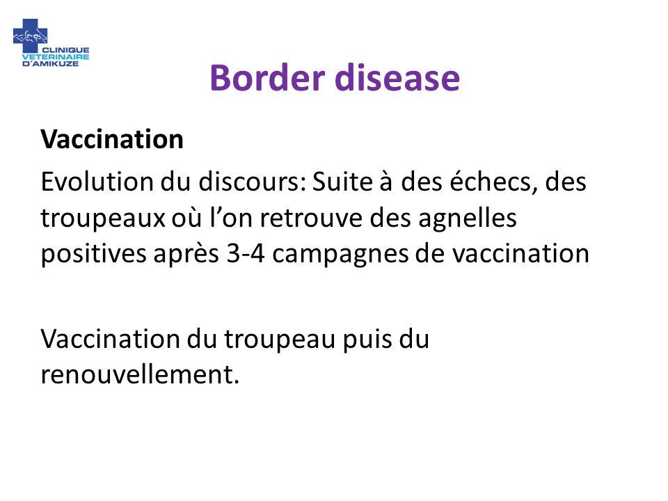 Border disease