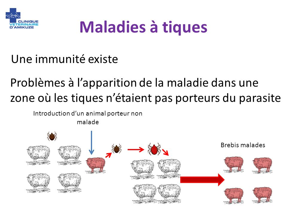 Introduction d'un animal porteur non malade