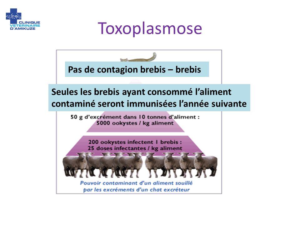 Toxoplasmose Pas de contagion brebis – brebis