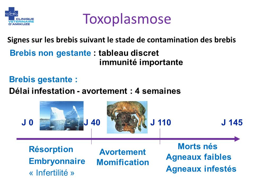 Toxoplasmose Signes sur les brebis suivant le stade de contamination des brebis. Brebis non gestante : tableau discret.
